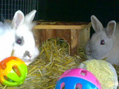 Verzorging van konijnen.